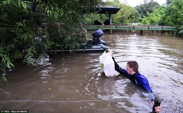 2BDD139500000578-3218723-A_volunteer_helps_to_rescue_animals_in_Zelyony_Ostrov_Park_Zoo_o-a-32_1441131912884